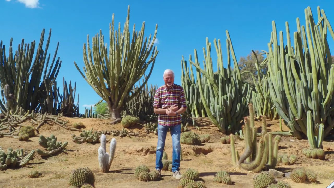 video Cactus Country