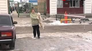 Власти региона предлагают гуманно бороться с бездомными собаками