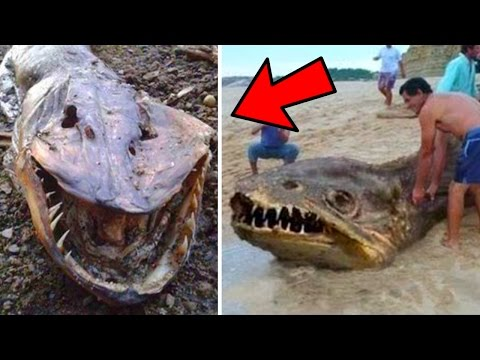 5 Unknown Creatures That Washed up on Beaches