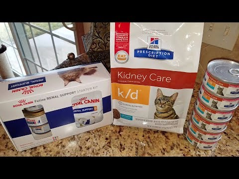 cat-food-review---hill's-prescription-diet-k/d-kidney-care-vs.-royal-canin-renal-support