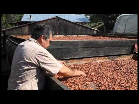 Visits to Our Cacao Farmers in Colombia