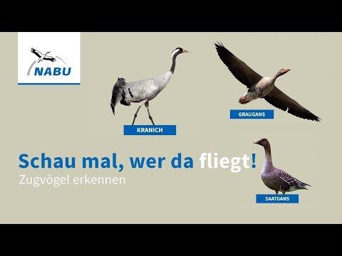 zugvögel deutschland