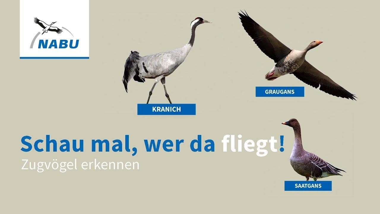 Zugvögel in deutschland