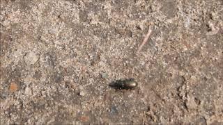 Про жуков