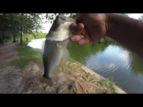 Memorial Hermann Park Lake, Houston TX (HD) Bass Fishing! And Good Eats! (Museum District)