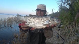 Пасхальный Голавлик Рыбалка Весной на Волге Ловля на Сильном Течении на Донки Закидушки