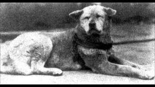 Video Hachiko Real Story download MP3, 3GP, MP4, WEBM, AVI, FLV Agustus 2018