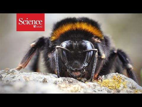 فيديو : النحل قادر على التفكير و الإبتكار !! 3