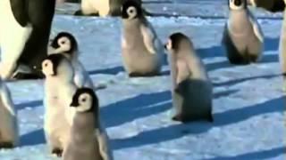 Gambar cover pinguini