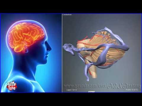Что находится в левом боку у человека и что там может болеть?