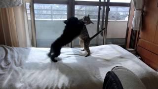 ベンガル猫のMee9ヶ月、トイプードルのAnne8ヶ月.