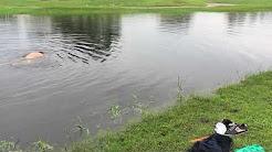 Jim palmer, deer creek golf club in Florida 6/9/17