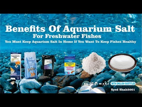 Benefit Of Aquarium Salt For Fishes  How To Use Aquarium Salt