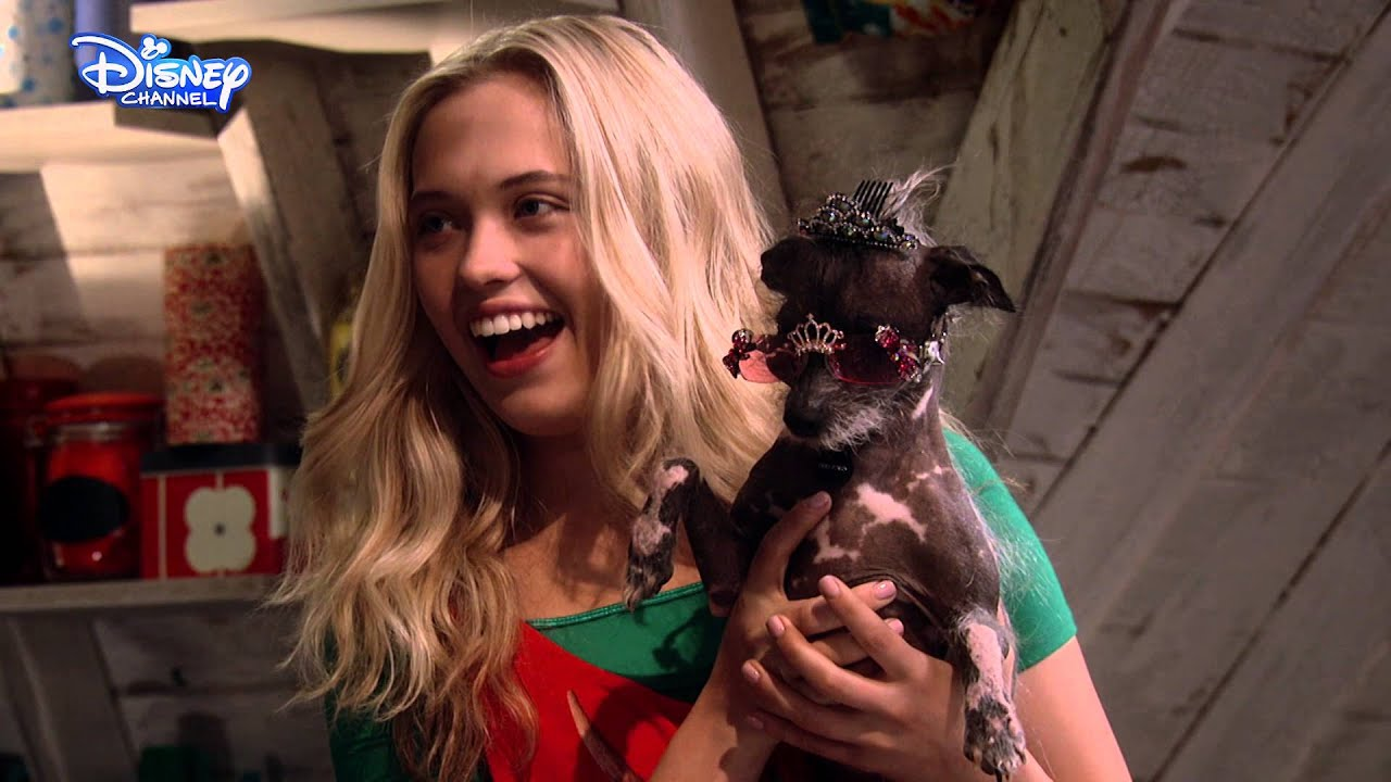 Diesel The Dog From Best Friends Whenever