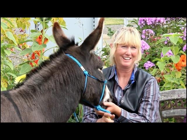 Hee-Haw! Donkeys 101