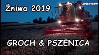 Żniwa 2019 ㋡ Koszenie Grochu & Pszenicy ㋡ Bizon Rekord z058☆ Zetor 12045 ☆