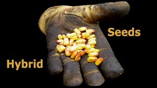Hybrids and the Emergence of Seed Monopolies