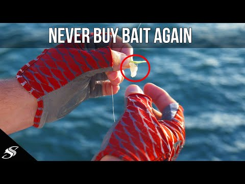 TOP Three Ways To Catch BAIT From A Fishing Pier!