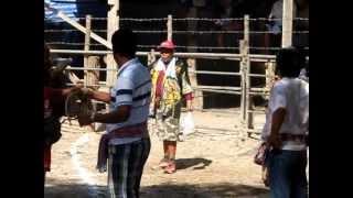 Repeat youtube video วัวชนชิงแชมป์ประเทศไทย2556 (1)