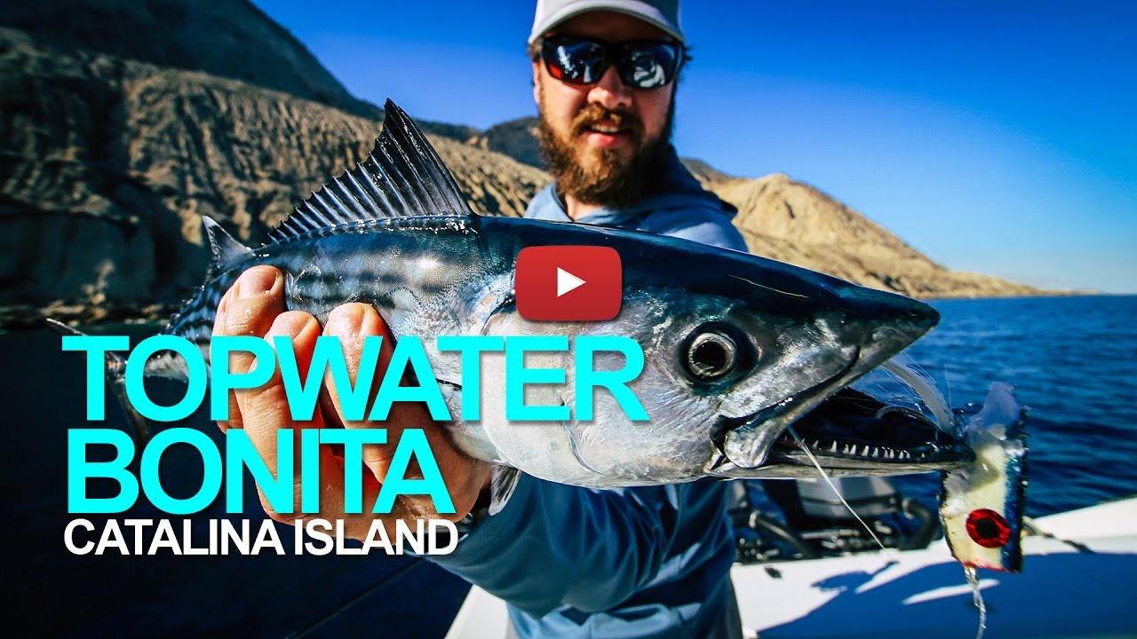 fly fishing southern california catalina topwater bonita