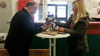 Hund Auf Ausstellung (biewer-yorkshire-terrier)