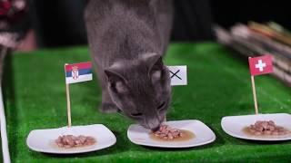 Ще успее ли Бразилия да победи Коста Рика - виж резултата според котето ВладИмир!