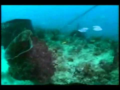 Aquarius as an Artificial Reef - Project SeaCAMEL