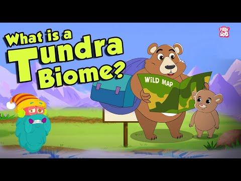 TUNDRA BIOME | What Is A Tundra Biome? | Tundra Region | The Dr Binocs Show | Peekaboo Kidz