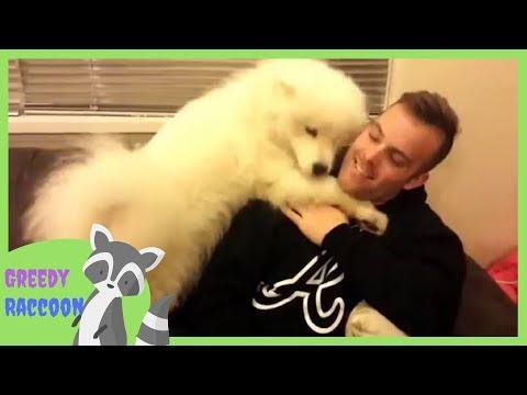 Samoyed dog hugs his human | Adorable dog hugging