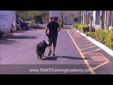 The K9 Training Academy - Jackson -