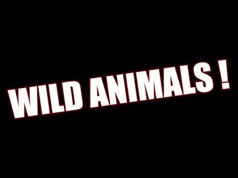 Wild Animals Caught On Tape | Mississippi Wildlife