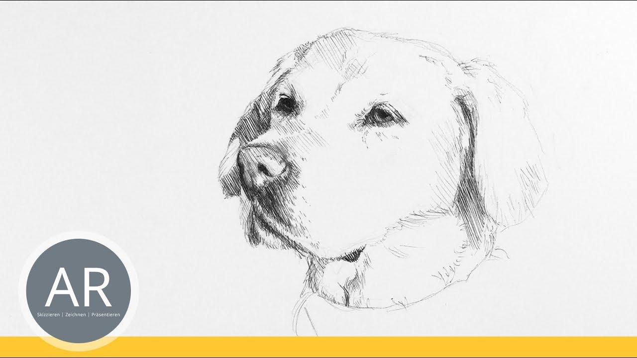 Hunde Portrats Zeichnen Lernen Tiere Zeichnen Mappenkurs