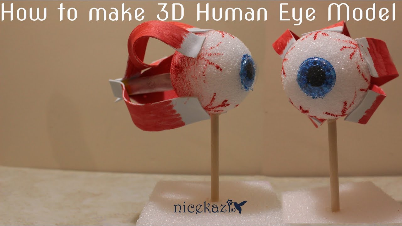 #3dhumaneyemodel #schoolprojects #stemprojects