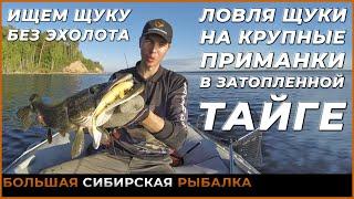 Ловля крупной сибирской щуки на крупные приманки в затопленной тайге Трофейная Рыбалка Спиннинг