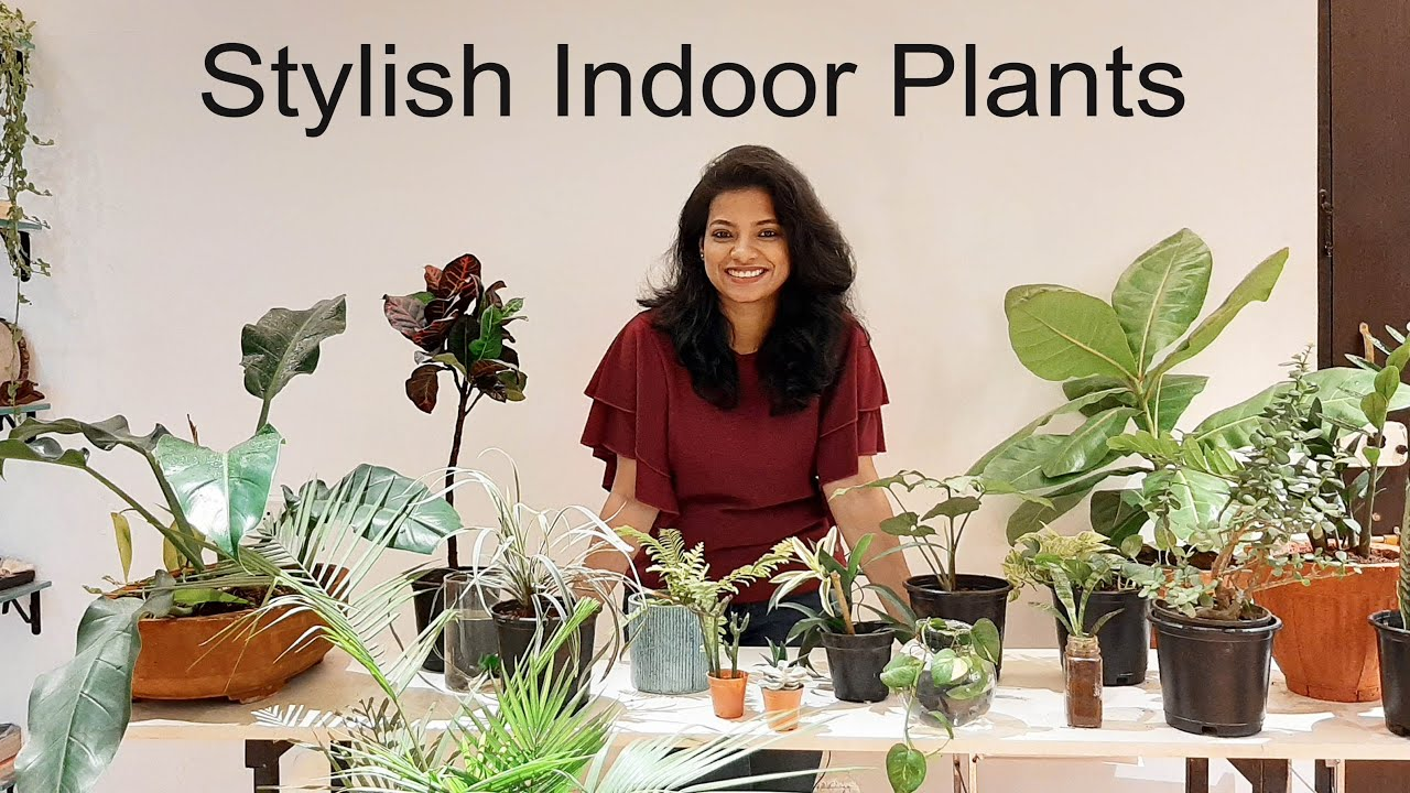 how to take care of plants at home in hindi