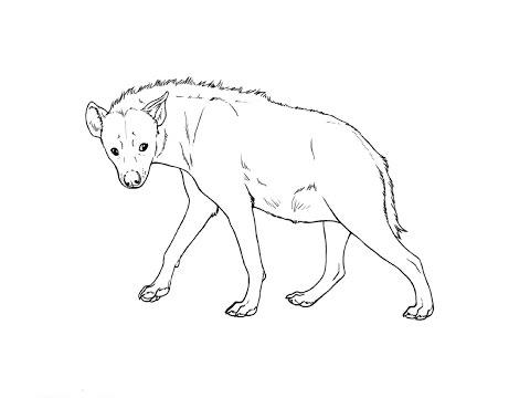 Как рисовать гиену