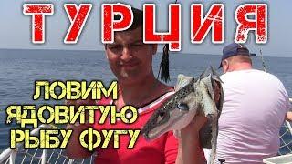 Отдых в Турции 2019 2020 Рыбалка в Турции Ловля на спиннинг рыбу Фугу