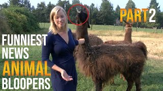 Funniest Animal Bloopers on Live TV Part 2