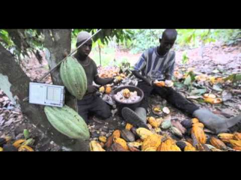 Child Slave Labor in West Africa