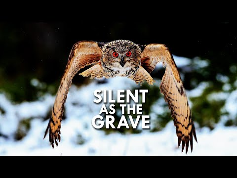 Owls are Dead Silent Flyers