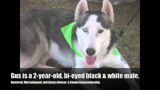 Have A Heart; Help A Husky (fl Rescue).mp4