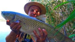 Рибалка з ночівлею! Чотири дні на річці з передплатниками ловимо карпа! Виживання 24 години!