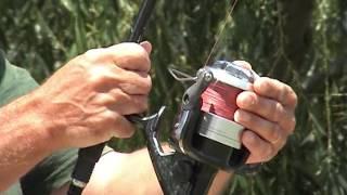 Pêche de la carpe et du silure à MEQUINENZA