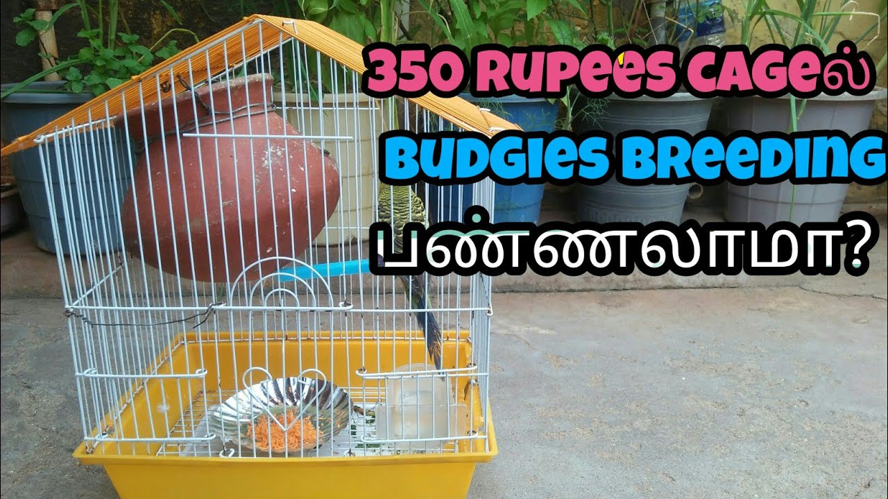 350 rupees imported cage is suitable for budgies breeding? தமிழ்