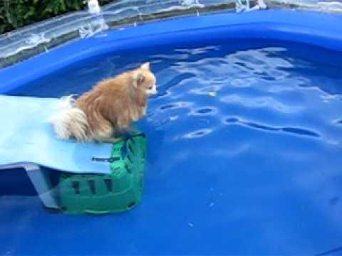 my dog swimming.