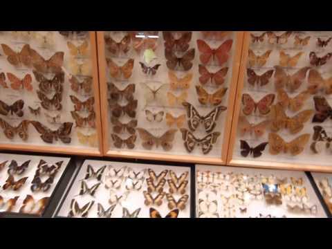 frankfurt insecten börse entomology