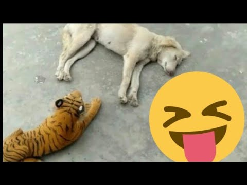 😂Tiger prank with sleeping dogs😂Try not to laugh dog afraid of stuff toy of tiger 🐯
