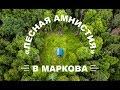 245 участков в Иркутской области  выведены из лесного фонда