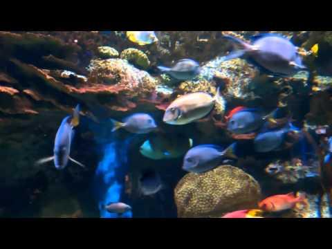 Adventure Aquarium in Camden New Jersey