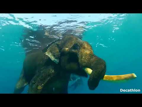 Amazing, an elephant swimming in the sea